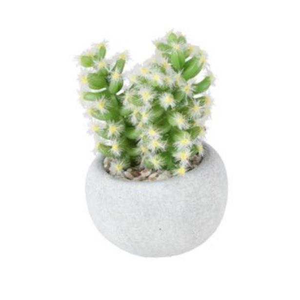 Oferta de Maceta Concreto Cactus 7x10 cm por S/ 12,9